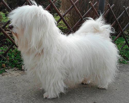 Одесская домашняя идеальная собака